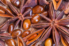 Macro view of illicium star seeds Stock Photography