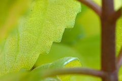 Macro view of leaf edge Royalty Free Stock Photography