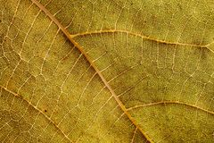 Macro view of leaf veins as texture and background for design. Organic and natural pattern.