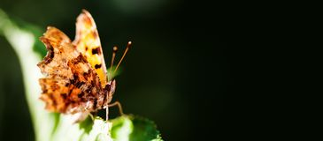 Macro view orange butterfly on green leaf. copy space, shallow depth field. Macro view orange butterfly on green leaf. copy space, shallow depth field royalty free stock photography