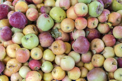 Macro view of organic apples in local market of Ezine town in Ca. Nakkale, Turkey Stock Images