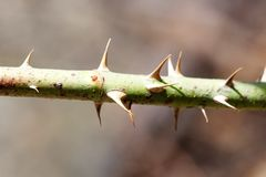 Macro view plant with spike thorns. Shallow depth of field, selective focus.  Royalty Free Stock Photos
