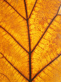 Macro view on textured autumn brown leaf Royalty Free Stock Photo