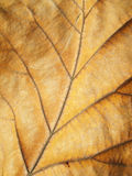 Macro view on textured autumn brown leaf Royalty Free Stock Photography