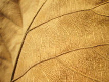 Macro view on textured autumn brown leaf Stock Images