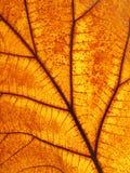 Macro view on textured autumn brown leaf Royalty Free Stock Photos