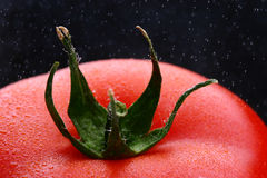 Macro view of tomato. Macro view of top and stalk of red tomato with droplets of water on black background royalty free stock photos