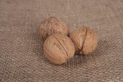 Macro view of walnut Stock Photography