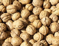 Macro view of walnut Stock Images