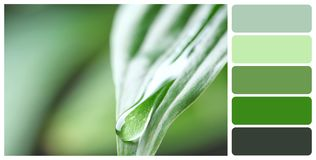 Macro view of water drop on green leaf. Color palette royalty free stock photos