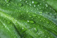 Macro view of water drops on leaf. Macro view of water drops on green leaf royalty free stock image