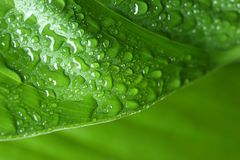 Macro view of water drops. On green leaf stock photo
