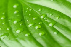 Macro view of water drops. On green leaf royalty free stock images
