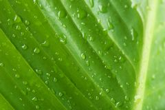 Macro view of water drops. On green leaf royalty free stock photography