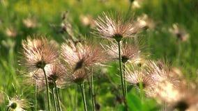 Macro view of wild flowers stock footage