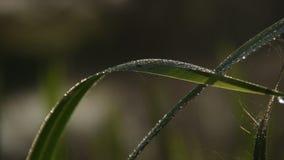 Macro-vista de la hierba mojada verde, niebla de la mañana que asoma sobre el río metrajes