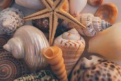Macro vista del fondo della conchiglia Stelle marine sul fondo delle conchiglie Molte conchiglie differenti struttura e fondo Immagine Stock