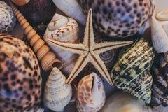 Macro vista del fondo della conchiglia Stelle marine sul fondo delle conchiglie Molte conchiglie differenti struttura e fondo Immagini Stock Libere da Diritti