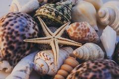 Macro vista del fondo della conchiglia Stelle marine sul fondo delle conchiglie Molte conchiglie differenti struttura e fondo Fotografia Stock Libera da Diritti