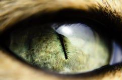 Macro vista del primo piano dell'occhio di gatto verde Fotografie Stock