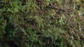 Macro vita delle formiche archivi video