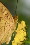 Macro vlinder Royalty-vrije Stock Afbeeldingen