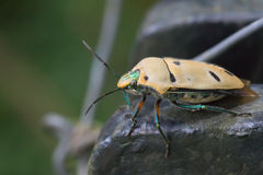 Macro vue d'insecte Photos libres de droits