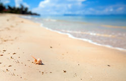 Macro vue de Seashell sur l'océan de tache floue images stock