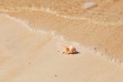 Macro vue de Seashell sur la plage de sable image libre de droits