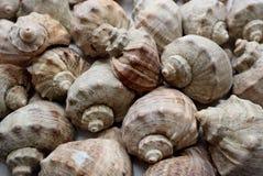 Macro vue des coquillages, images libres de droits