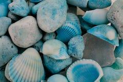 Macro vue des coquillages Fond de Seashell Texture des coquillages bleus image stock