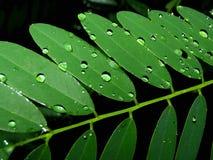 Macro vue des lames vertes Photos stock