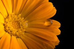 Macro water drop flower Stock Photos