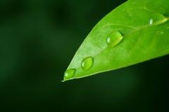 Macro water drop leaf Stock Image