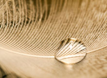 Macro of water drop on white feather Stock Photos