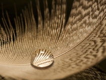Macro of water drop on white feather detail royalty free stock photo