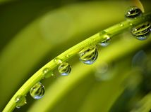 Macro of water drops Stock Photography
