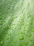 Macro water drops on bamboo leaves Royalty Free Stock Photography