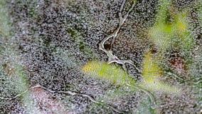 Macro water drops on cobweb Royalty Free Stock Image