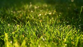 Macro of water drops falling onto grass stock footage