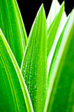 Macro of water drops on fresh green leaf Royalty Free Stock Image