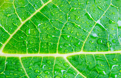 Macro water drops on green leaf Stock Images