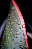 Macro of Water Drops on Leaves Royalty Free Stock Photo