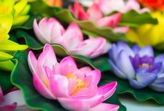 Macro of water lily nenufar Stock Image