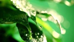 Macro waterdrop sulle foglie stock footage