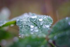 Macro waterdrop Stock Photo