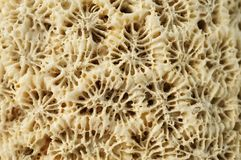 Macro: Weathered coral rock. royalty free stock photography