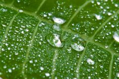 Macro of wet leaf royalty free stock photography