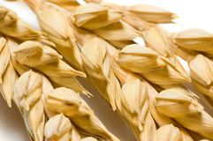 Macro of wheat ears. Isolated on white Royalty Free Stock Image