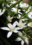 Macro of white flowers Stock Images